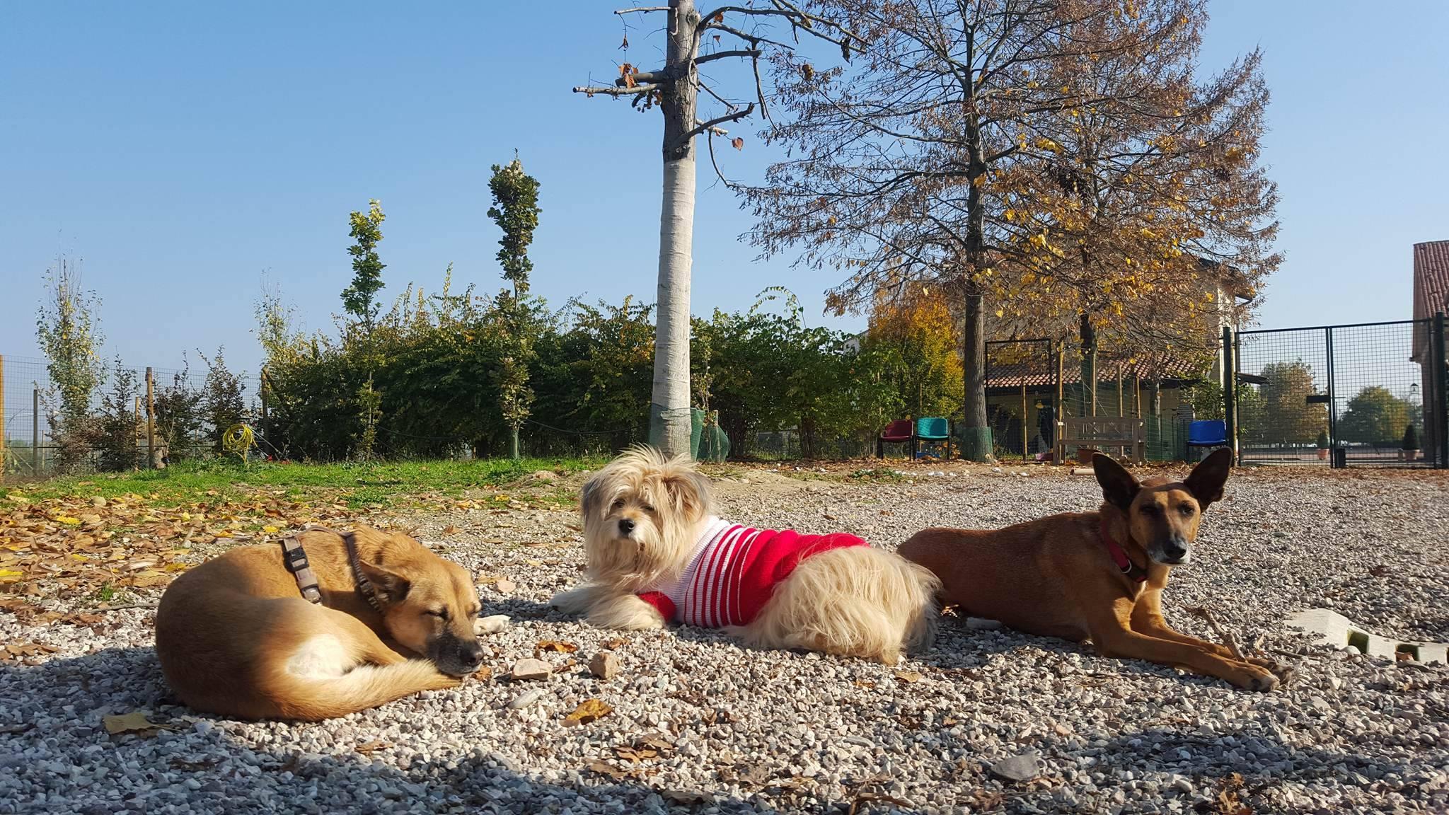 pensione, asilo per cani, dog e cat sitting - il piccolo campo